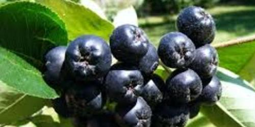 Le Jus d'Aronia